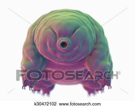 A water bear Drawing | k30472102 | Fotosearch