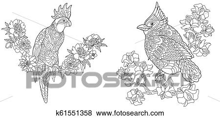 Coloring Pages With Cockatoo And Cardinal Bird Clip Art K61551358 Fotosearch
