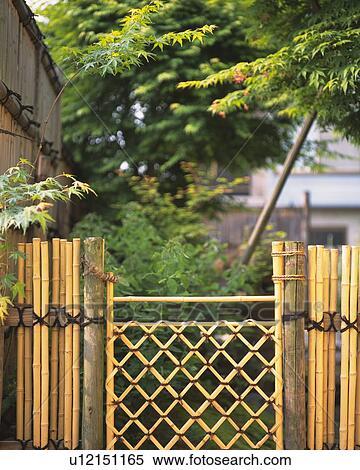 bambou barriere dans jardin japonais japon vue frontale foyer differentiel banques de photographies