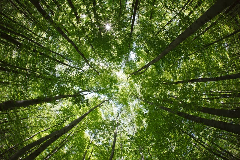 How Field Service Can Go Green