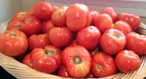tomatoes-neworleanstomatocompany