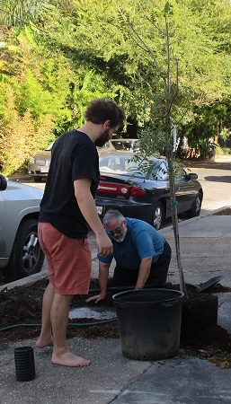 Homeowner Brian Lebaron provides support as Charlie London plants trees in front of Brian's home on Dumaine