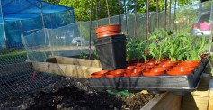 Pots / Plants