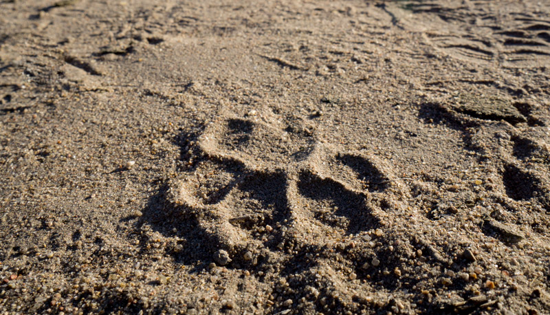 Lion paw print, taken on a supervised bush walk. Sony a6000 + Sony 10-18mm f/4 lens @ f/11, 1/250 second, ISO100