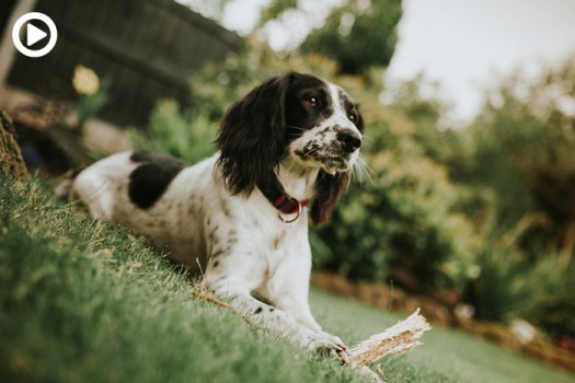 Ten Easy Tips for Dog Photography