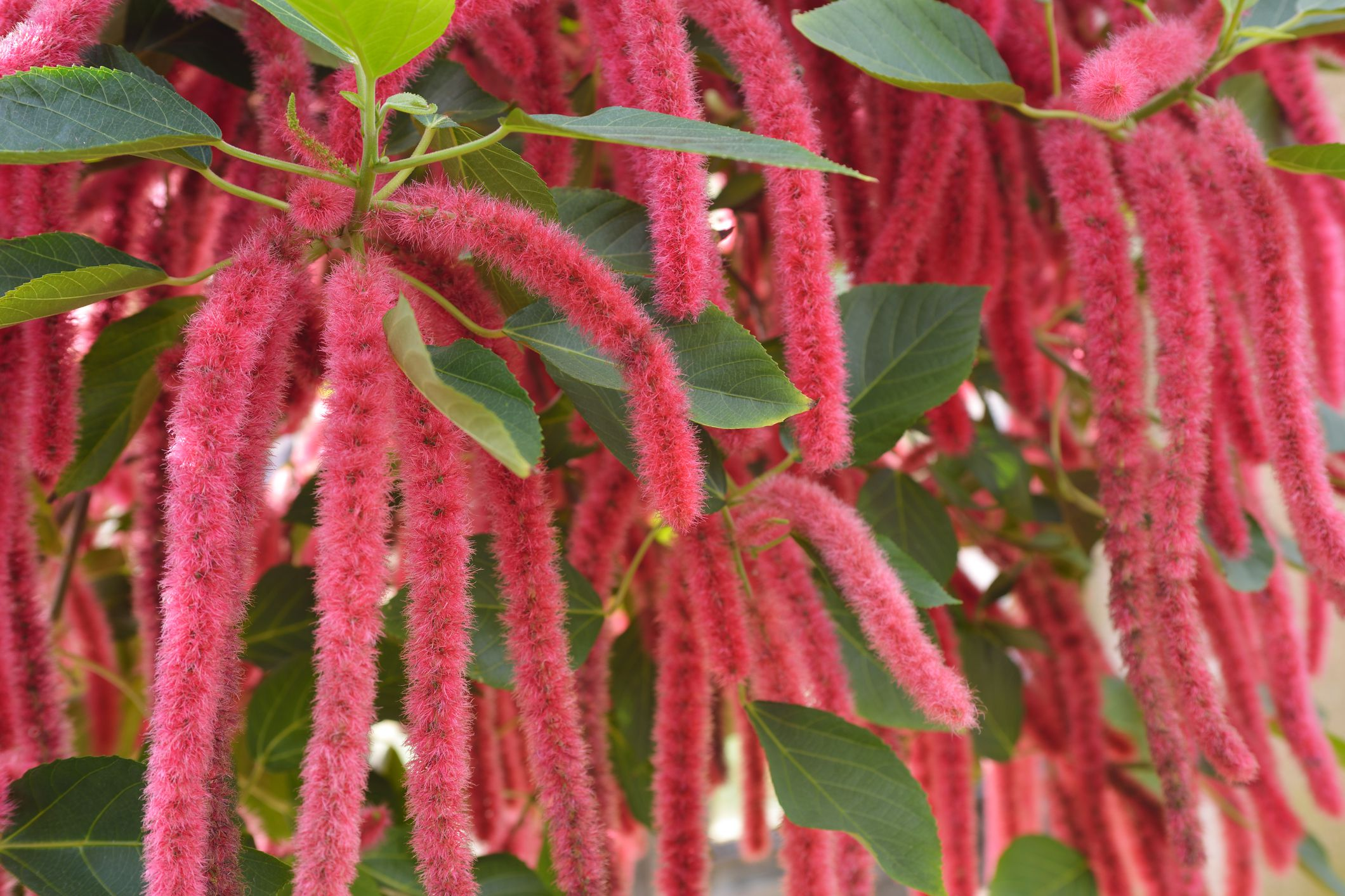 Best Interior Plants