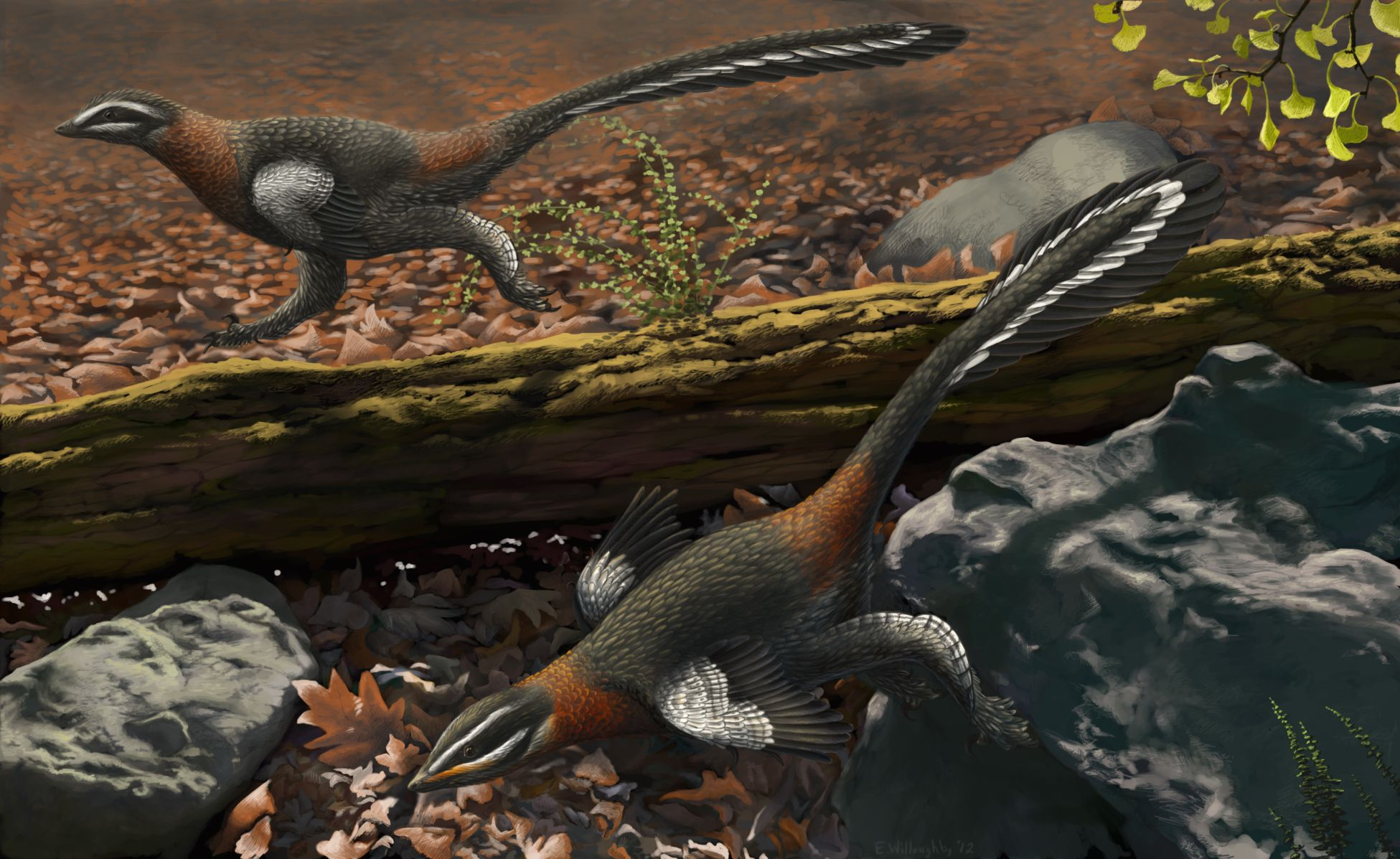 Why Did Dinosaurs Have Feathers