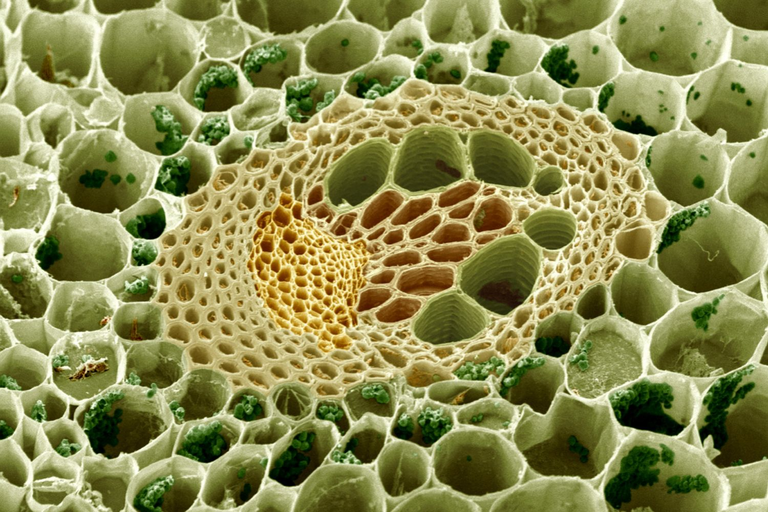 Learn The Different Types Of Plant Cells