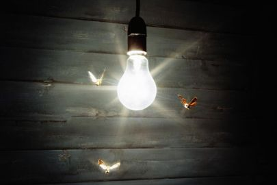 """Résultat de recherche d'images pour """"moth attracted to light"""""""