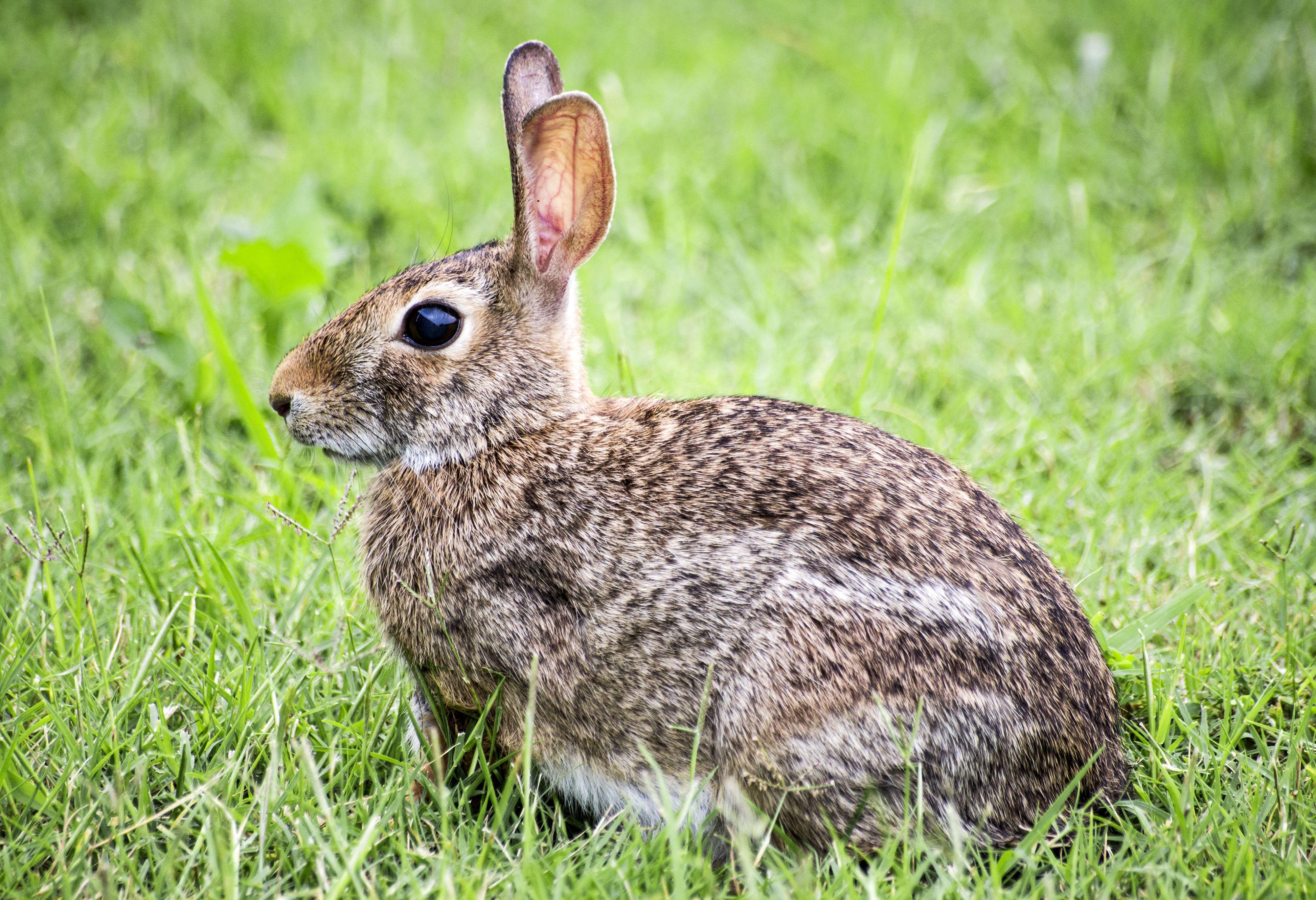 Outdoor Rabbit Decor