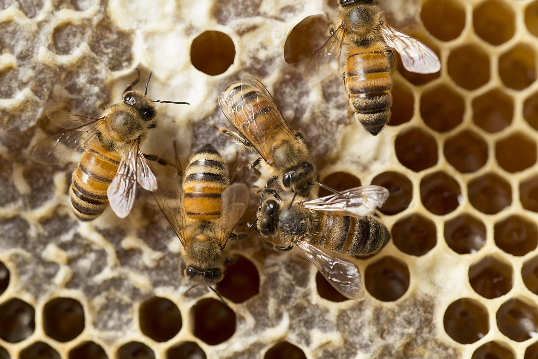 Honey Syrup Bees Making
