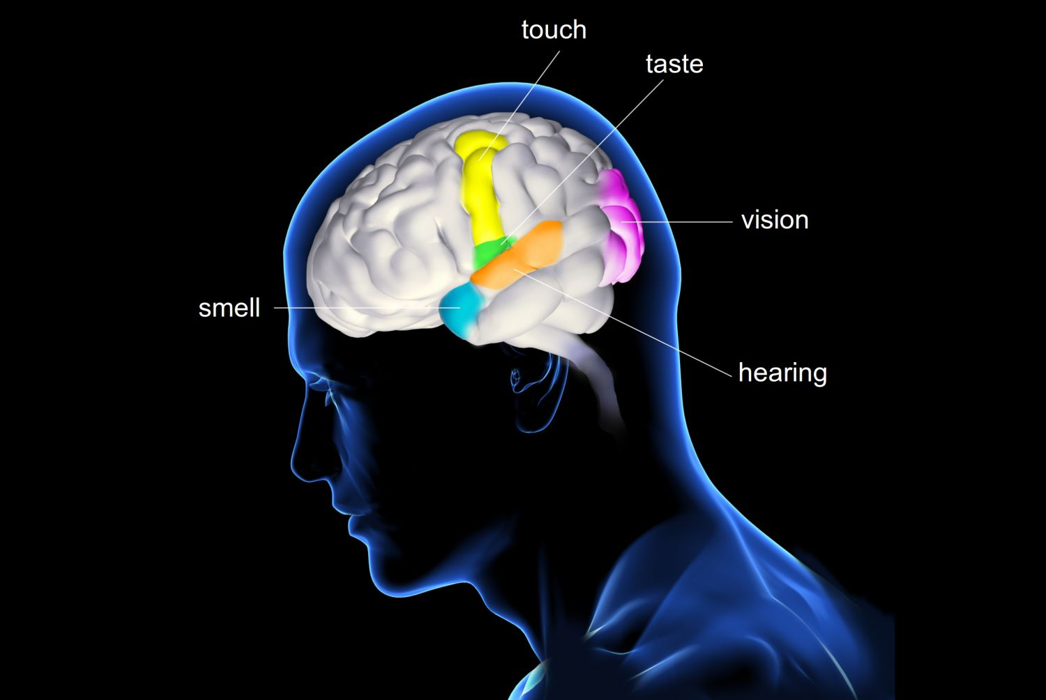 The Five Senses And How They Work