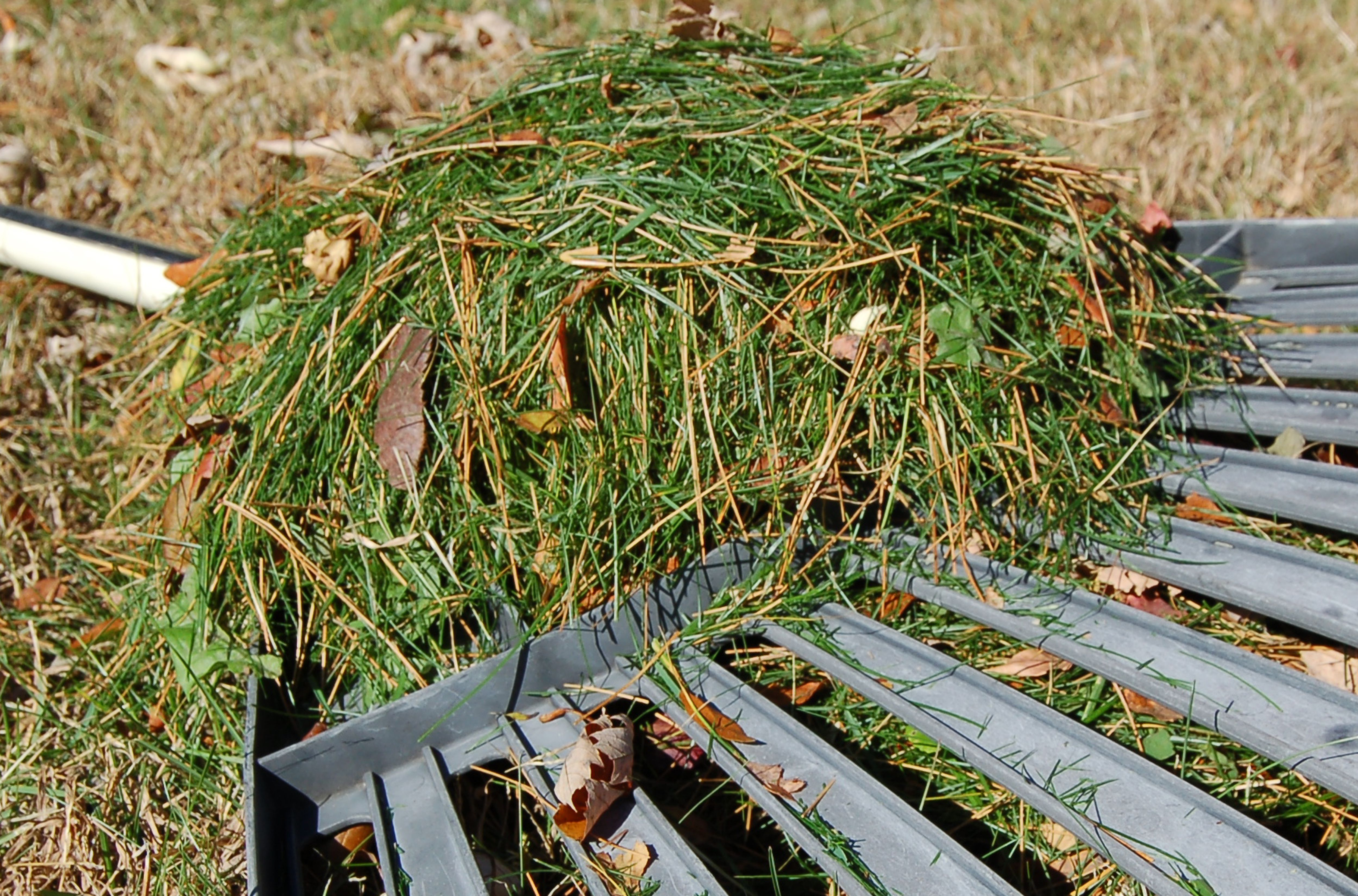 Should You Leave Leaves Your Lawn