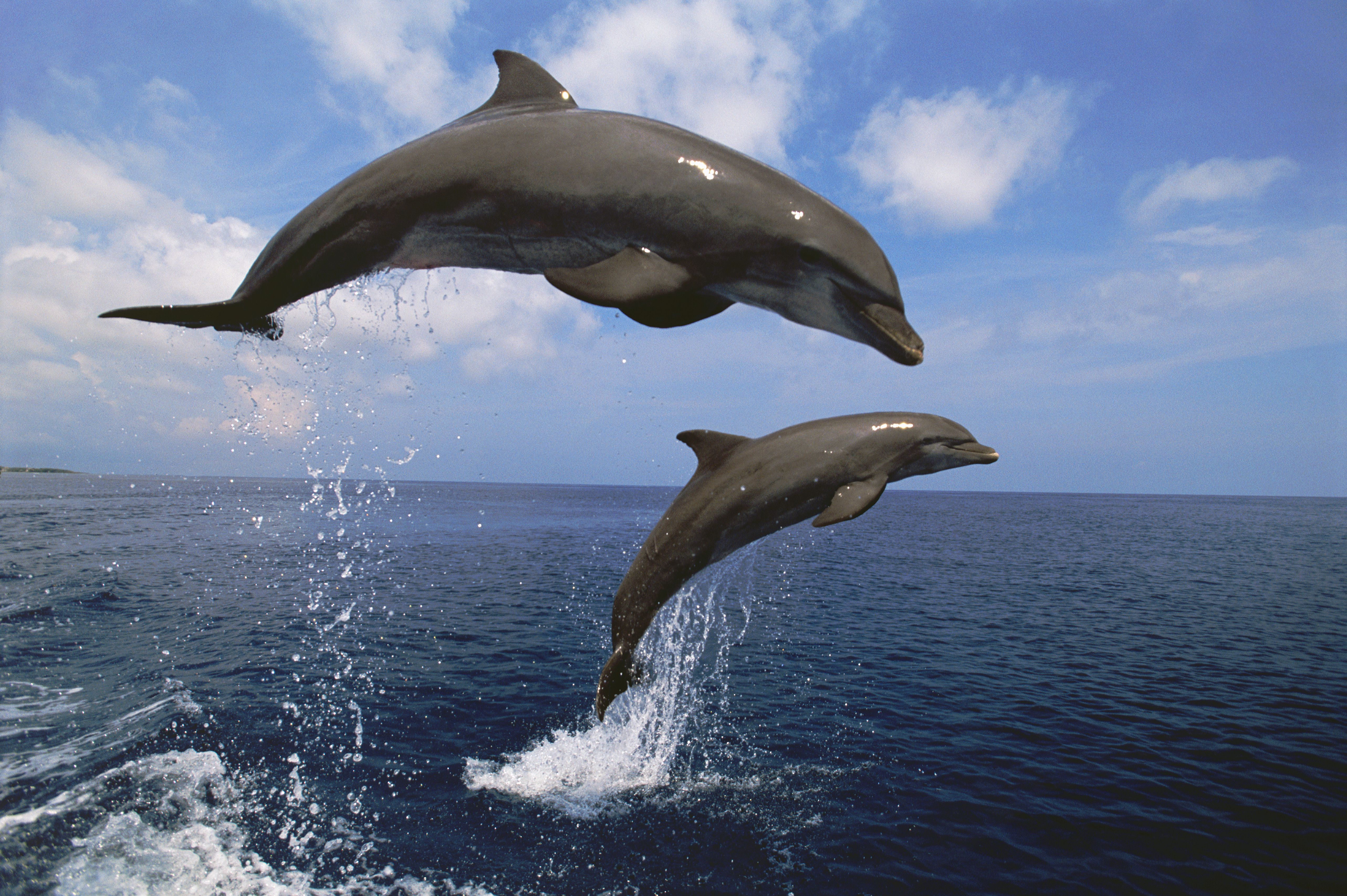 Bottlenose Dolphin Worksheet Kindergarten Bottlenose