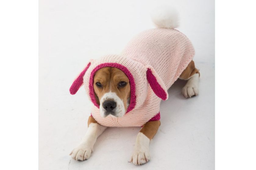 Dog in a knitted bunny costume