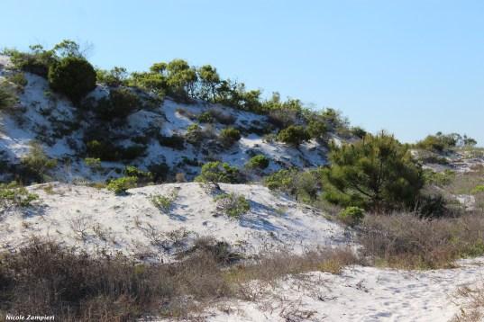 Beach dune00001