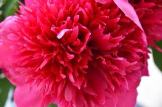 bloemen d