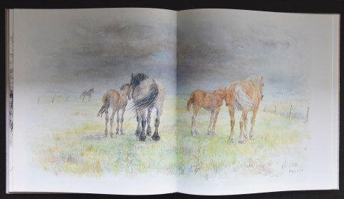 Klaasse paarden c