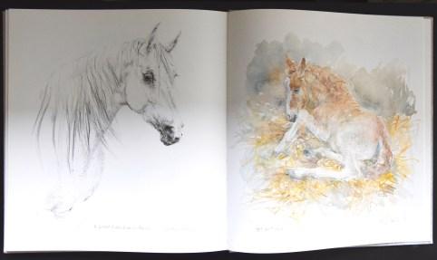 Klaasse paarden e