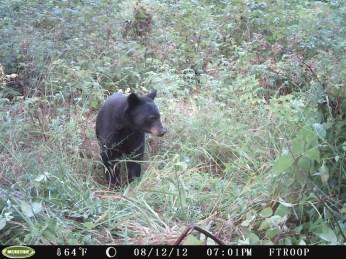 Derrie's Bear