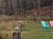 The only deer I saw opening weekend