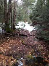 Snow in da woods!