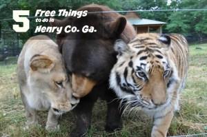 The BTL Trio. #BestFriendsForever photo courtesy of Noah's Ark Animal Sanctuary