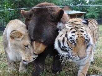 Noah's Ark Animal Sanctuary via @FieldTripswSue