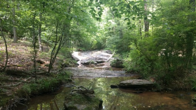 The creek by the mountain bike trails at Hard Labor Creek State Park