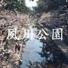 2015年 桜の名所「夙川公園」でお花見!iPhone6で撮影した桜の動画と写真