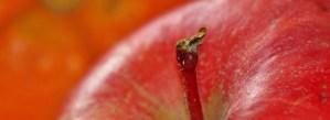 Apfelsorten - Apfelbild