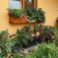 Every Fuchsia has its Name!