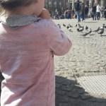 Tauben beobachten