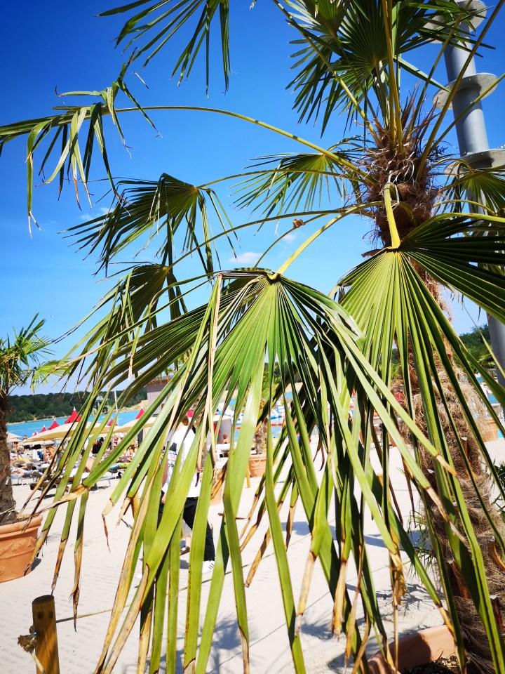 Überall Palmen - Copyright: fuchsliebende