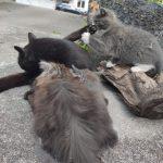 Katzen_Ferienwohnung_Staerk