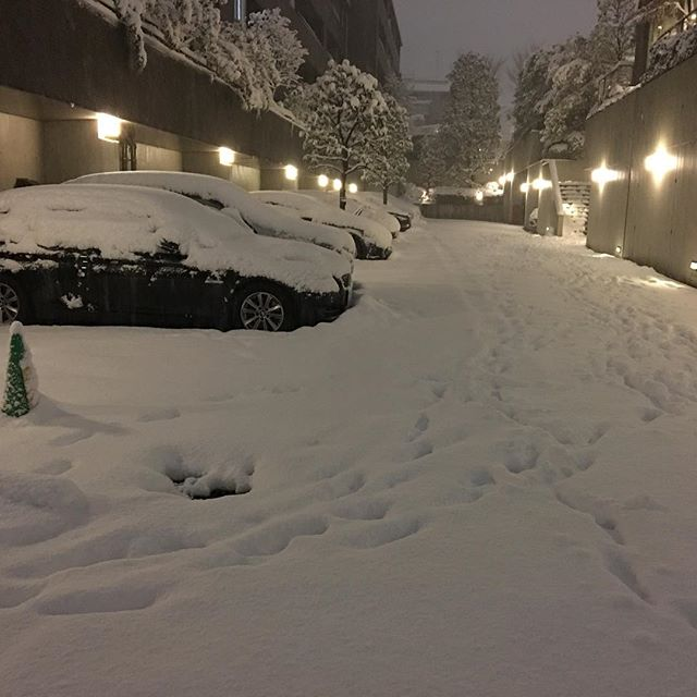 Tokyo tonight, well, snow stopped falling. trains back to normal tomorrow