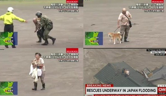 Dogs saved by a rescue team