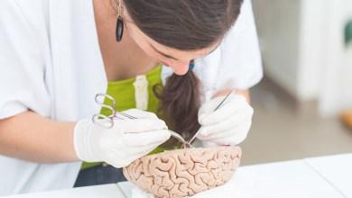 Promueve laboratorio trasnacional investigación en neurociencias