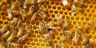 Elaboran paneles con popotes para apoyar diseminación de abejas
