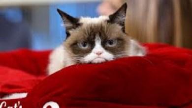 """¡Lloran en las redes muerte de """"Grumpy Cat""""!"""
