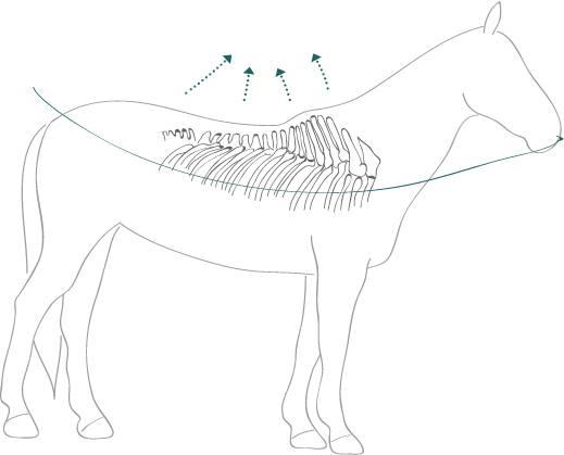 Quelle: Christina Schumann, slaka-pferde.de
