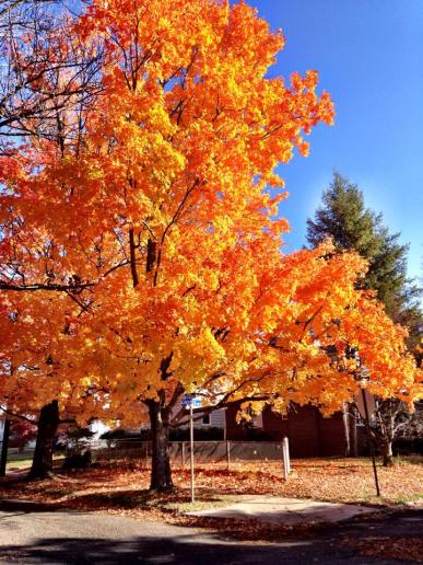 From my neighborhood last Fall. Bring on the foliage.
