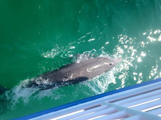 dolphins in key west