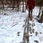 Hiking Six Mile Run Park