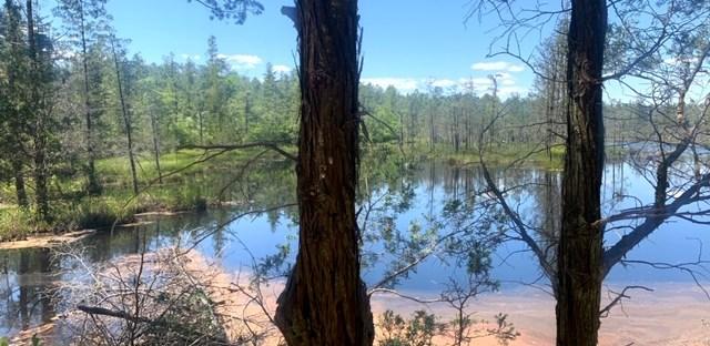 Hiking Batsto River (Wharton State Park)