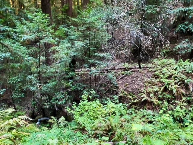 Purisima Creek to Grabtown Gulch to Borden Hatch Mill Loop
