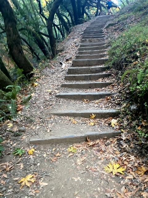 Stairs at Mount Tamalpais Watershed