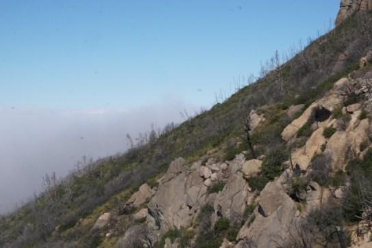 Mount Saint Helena Summit Trail (Calistoga)