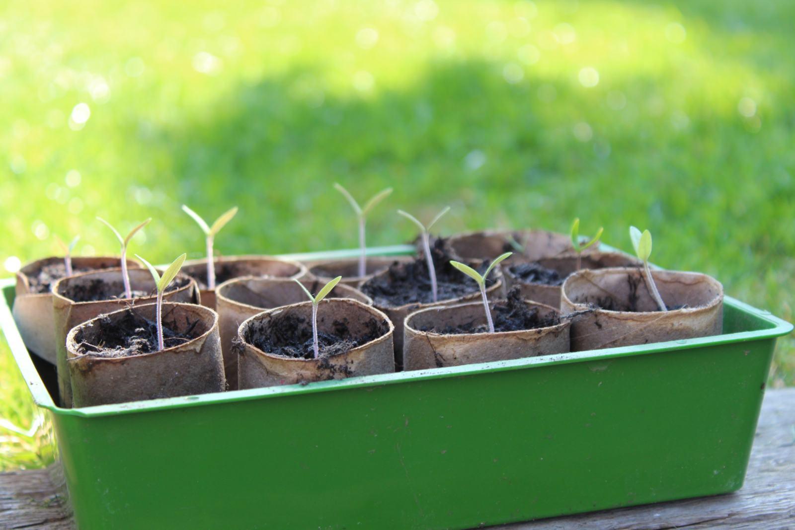 Home Vegetable Garden Project Update 3