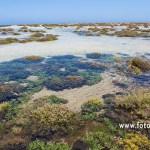 Saladar de las Lagunillas - Isla de Lobos